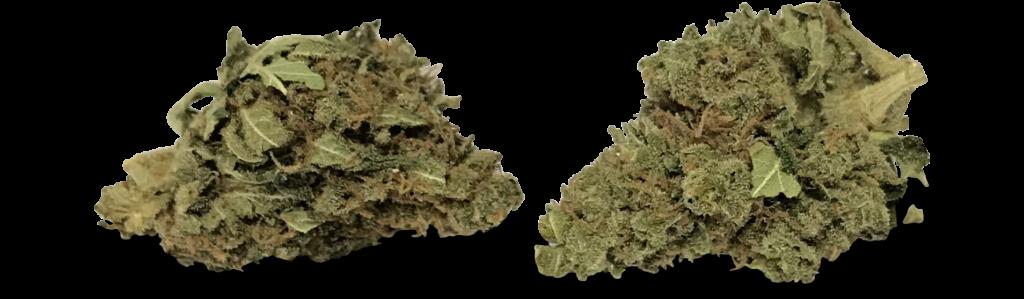 CBD Blüten